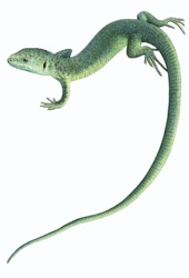 Lizard on white background