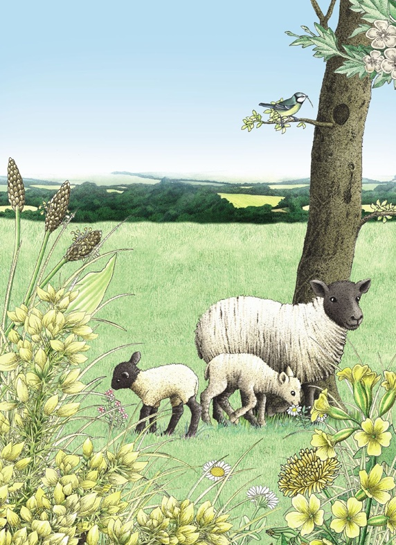 Sheep with lambs grazing in field