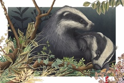 Badgers in grass