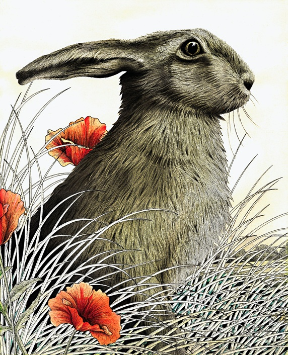 Hare (Lepus europaeus) sitting in grass and poppies