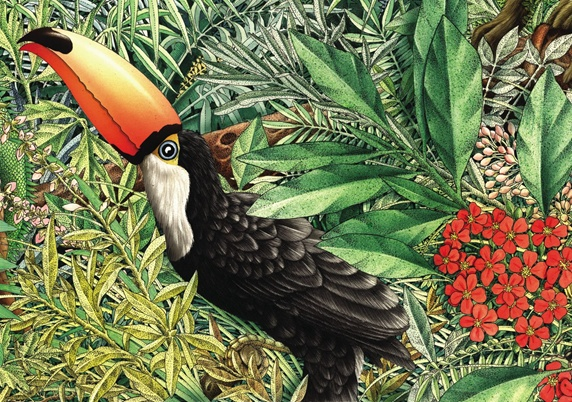 Toucan in jungle