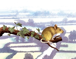 Close-up of mouse sitting on branch