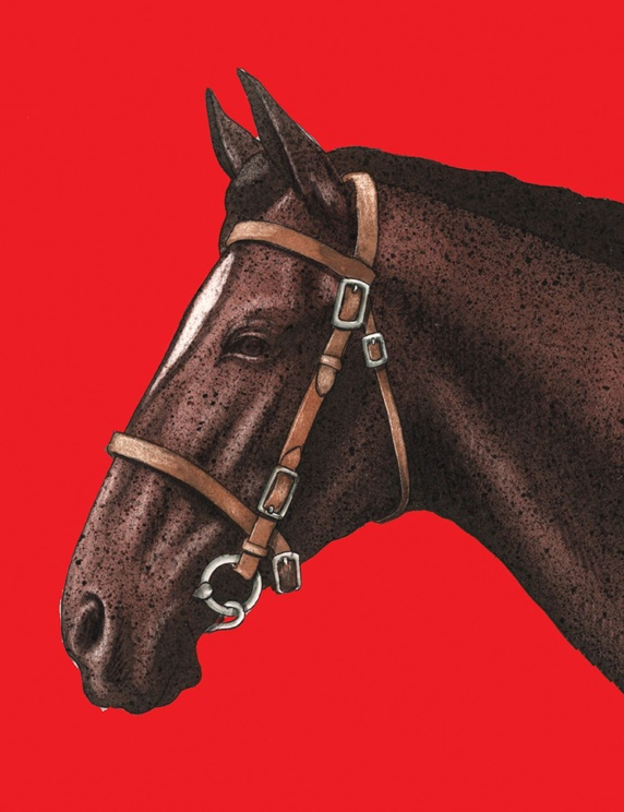 Close-up of horse on red background