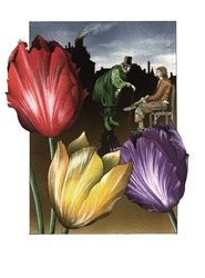 Close-up of colorful tulips with two men in background
