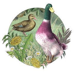 Duck and goose in standing in meadow