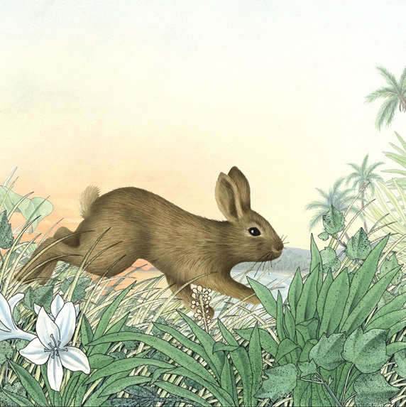 Side view of rabbit in meadow