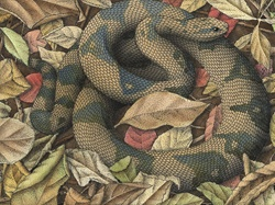 Snake in autumn leaves