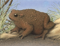 Close-up view of toad