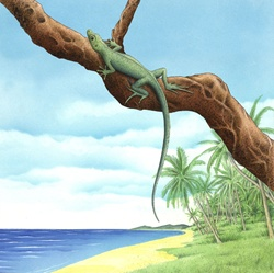 Lizard on branch by sea