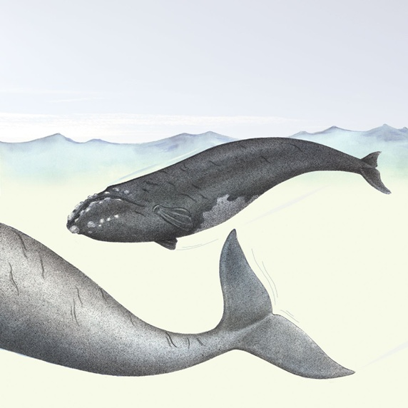 Two whales in sea