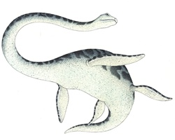 Water dinosaur seen from below against white