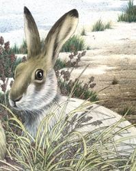 Illustration of brown hare sitting in meadow