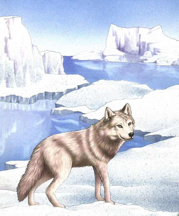 Illustration of wolf walking on ice