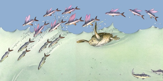 Illustration of turtle and school of fish