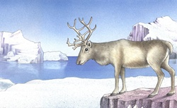 Illustration of deer standing on ice