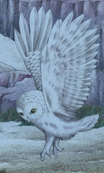 Illustration of white owl