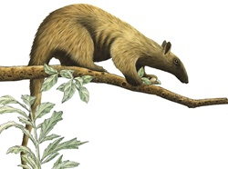Illustration of anteater