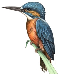 Illustration of colorful bird