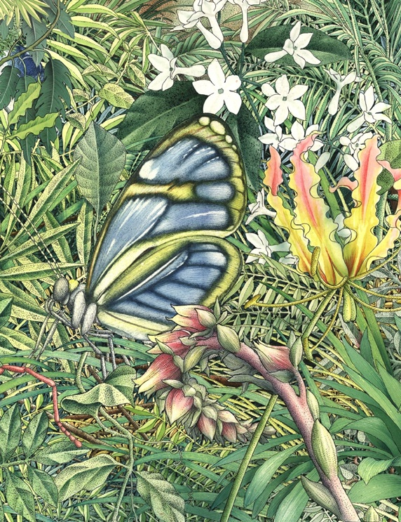 Illustration of butterfly in meadow