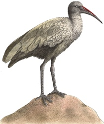 Illustration of grey bird