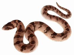 Snake on white background