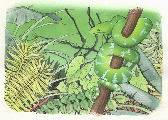 Green snake in forest