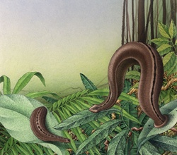 Leech in rainforest