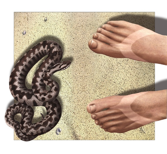 Man's feet beside snake on sandy beach