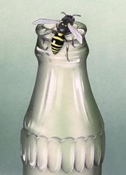 View of bee on empty bottle