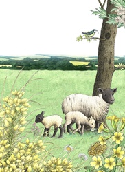 Sheep family in meadow