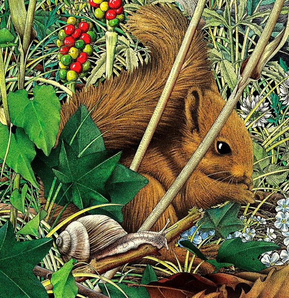 Red squirrel (Sciurus vulgaris) and snail in foliage