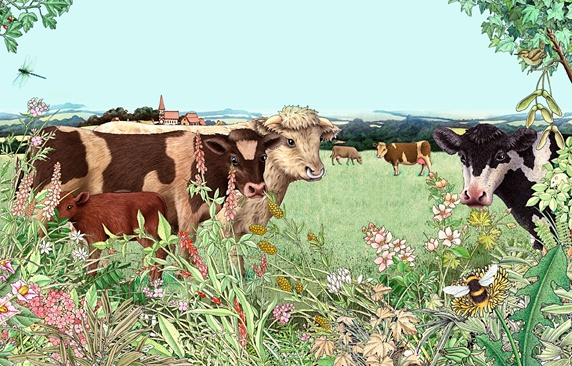 Cows, bull and calf in summer pasture with wildflower hedgerow