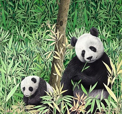 Pandas in Bamboo Field