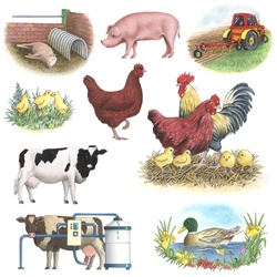 Livestock on white background