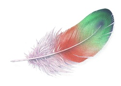 Multi colored feather