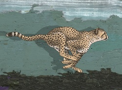 Side-view of leopard running