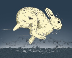 White rabbit running in field