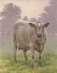 Brown cow in meadow looking at camera