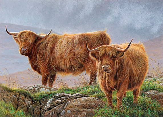 Highland cattle in rugged moorland