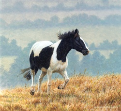 Black and white horse galloping in fields