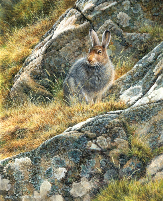 Rabbit sitting by rock covered with lichen