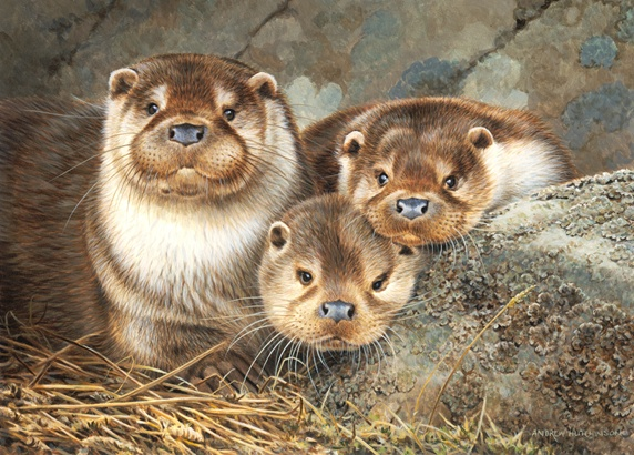 Three minks by rock, looking at camera