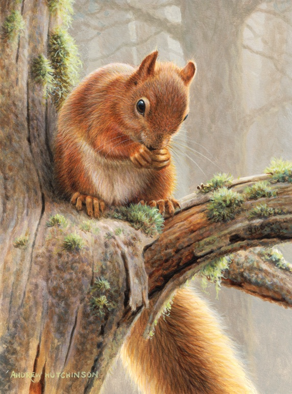 Red squirrel sitting on tree in forest