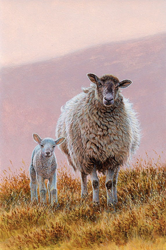 Sheep with lamb in moorland
