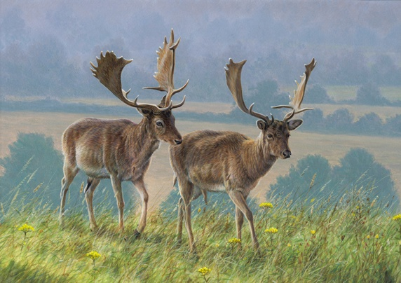 Two deers walking in meadow