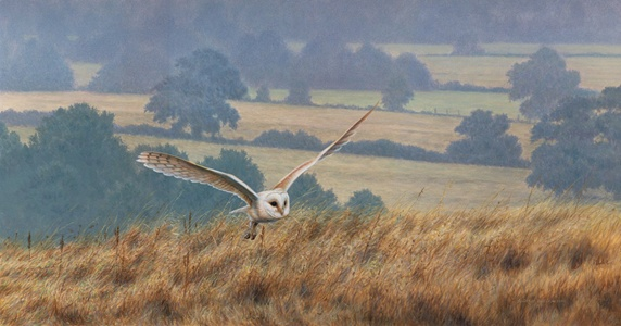 Owl landing in fields