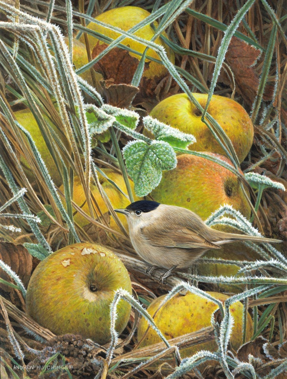 Ripe apples on frosted grass, and small bird