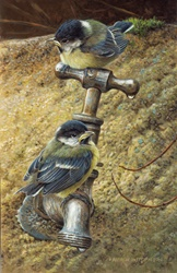 Two chickadees perching on metal tap