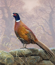 Pheasant on stone wall, trees in background