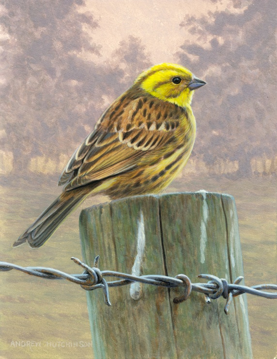 Pastel colored image of yellow bird perching on wooden pole, trees in background, wired fence in foreground